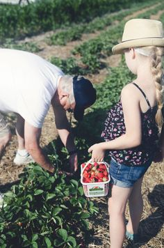 Shot of my baby picking berries with her papa in Capital Parent Magazine.