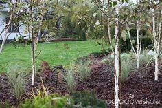 Ogród z lustrem - strona 94 - Forum ogrodnicze - Ogrodowisko