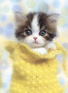 20 Most Popular Kitten Names http://www.babble.com/pets/20-most-popular-kitten-names/ #cats #kittens