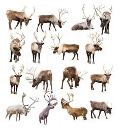 A Place to find resources, tools, templates, overlays and more for Photographers and Artist. Learn how to edit by hand. Find out how to create award winning photo composites and manipulations. Real Reindeer, Animals And Pets, Cute Animals, Christmas Art, Art Tutorials, Animal Photography, Mammals, Overlays, Moose Art
