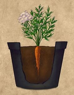 How to Grow and Care for Carrots in Containers  http://www.vegetable-garden-guide.com/growing-carrots.html