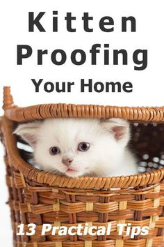 Kitten Proofing Your Home: 13 Practical Tips Kittens kitten care Kitten Baby, Baby Kittens, Cats And Kittens, Raising Kittens, Orange Kittens, Cats 101, Kitten Toys, Caring For Kittens, Cats Meowing