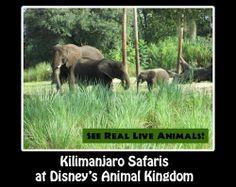 Animal Kingdom Theme Park Fun Facts