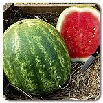 Organic Triple Crown F1 Hybrid Watermelon
