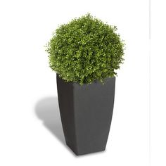 Found it at Wayfair - Square Pot Planter
