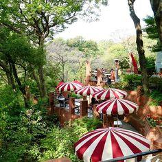 お友達と#秋の遠足 #鎌倉#樹ガーデン#樹カフェ