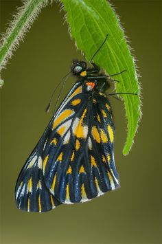 Photograph Butterfly by Gerardo Barrera on 500px