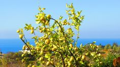 Have a nice second Sunday of Advent and enjoy Ischia :)