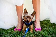 Pink Shoes and a Yorkie