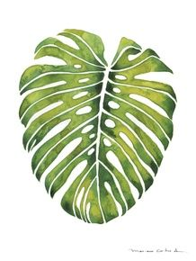 FOLHA TROPICAL VERDE Tropical Art, Tropical Leaves, Leaf Stencil, Leaf Template, Templates, Plant Illustration, Easy Paintings, Botanical Prints, Tattoo Project