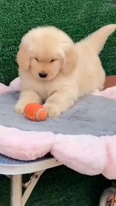 Super Cute Puppies, Baby Animals Super Cute, Cute Baby Dogs, Cute Funny Dogs, Cute Dogs And Puppies, Cute Little Animals, Cute Funny Animals, Doggies, Funny Puppies