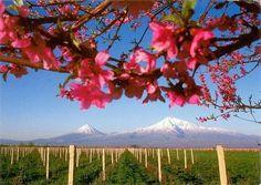Ararat Valley in Armenia