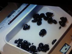 Twitter / NatureLive: The contents of Toshi's 'beetle ...