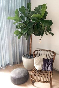Bedroom Plants, Home Decor Bedroom, Ficus Lyrata, Interior Design Living Room Warm, Happy New Home, House Plants Decor, Interior Plants, Cool Plants, Living Room Inspiration