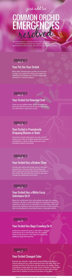 common-orchid-emergencies-resolved-infographic.jpg