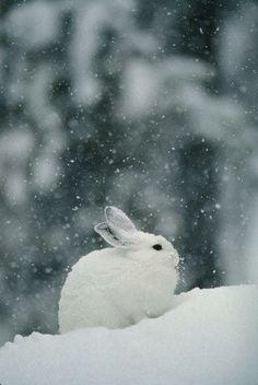 konijn in de sneeuw