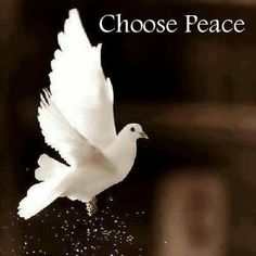 Study the true Bible & find the path of Peace with the Prince of Peace & avoid cults & false religions by your own choice. www.magnificatmealmovement.com