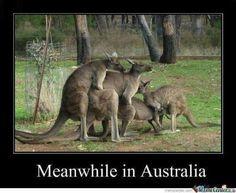 Kangaroos Gettin' Busy