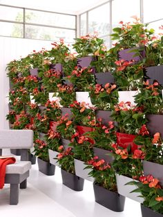 anthurium wall - green  office space