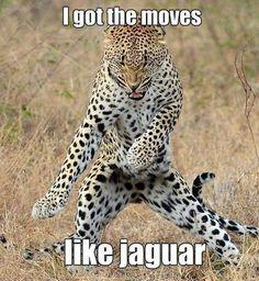 Moves Meme #Got, #Jaguar