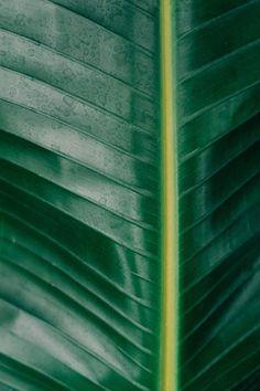 New free stock photo of nature plant leaf via Pexels https://www.pexels.com/photo/botanical-leaf-nature-plant-333634/