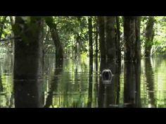 ▶ Equator - Rivers of the Sun - Amazonia - YouTube