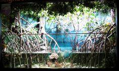 mangrove exhibit | Flickr - Photo Sharing!