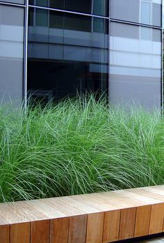 Mitered seat with grasses Garden Spaces, Balcony Garden, Outside Living, Outdoor Living, Raised Planter Boxes, Planting Grass, Home Garden Design, Modern Landscaping, Ornamental Grasses