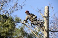 Tree Removal Danbury