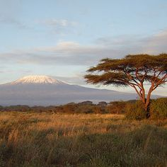Amboseli National Park, Kenya - I stunning park with great view of Mt.Kilimanjaro. One of my favorite places to visit in Kenya.
