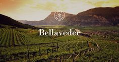 The company is located in Maso Belvedere, in the town of Faedo - Trento. The property covers about eight hectares, of which 7.4 are vineyards: soils form a single body around the old manor house...