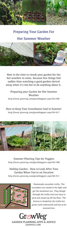 A collection of articles from growveg.com on how to help your plants survive the heat of summer. How to continue to make best use of your greenhouse,how to use shading, how to mulch, what to mulch with and how to look after your plants even though you are on vacation!!