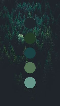Brand color palette inspiration designed by Amari Creative, branding and design studio. Dark green and blue. Colour Schemes, Color Combos, Green Colour Palette, Colour Board, Color Swatches, Color Theory, Color Inspiration, Colours, Design