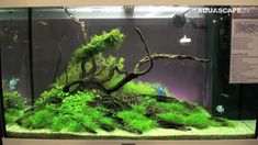 tropical fish substrate clean - Google Search