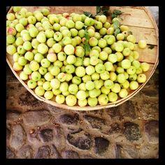 #nectarine #bazaar #cunda #ayvalik