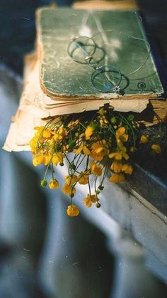 Excellent Photography Tips For Shooting Great Photos – Photography Flower Aesthetic, Book Aesthetic, Aesthetic Vintage, Aesthetic Photo, Aesthetic Pictures, Book Photography, Creative Photography, Landscape Photography, Photography Flowers