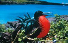 Galapagos Islands, my dream vacation!