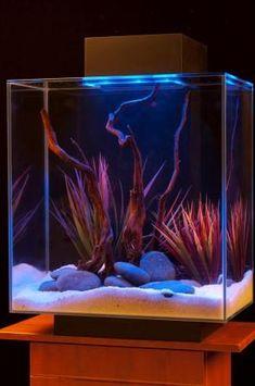 Amazon.com: Fluval Edge 12-Gallon Aquarium with 42-LED Light