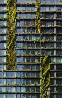 Entertaining the idea of hosting a cascading vertical wall of plants can come with a long list of feasibility questions. This week, we set out to answer them.