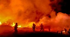 Devastation-Cape Fire 2015 - Environment News South Africa News South Africa, Table Mountain, Natural Disasters, Cape Town, Firefighter, Battle, Environment, Concert, Pictures