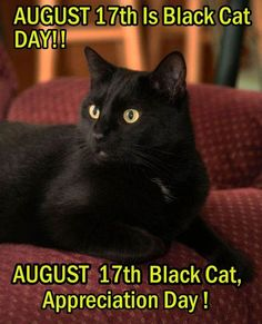 Black Cat Appreciation Day, August 17th, 2014. We love black cats!