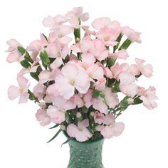 solomio pink funza bunch 350 b607403b