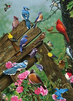 Birds of the Forest is a 1000 piece jigsaw puzzle from Cobble Hill featuring a colorful display of wild birds. 5d Diamond Painting, Fun Challenges, Reno, Bird Design, Puzzle Pieces, Wild Birds, Bird Art, Beautiful Birds, Pretty Birds