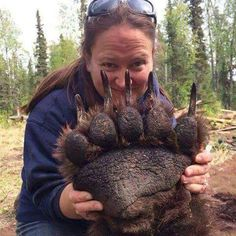 The size of a sedated grizzly bear's paw~West Coast Native News