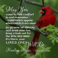CARDINALS appear when ANGELS are near. When I see a cardinal I will hope it is one of my loved ones in heaven looking in on me. Miss Mom, Healing Hugs, Healing Quotes, Encouragement, First Love, My Love, After Life, Belle Photo, Cardinals