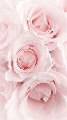 Обои iPhone wallpaper flowers roses