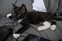 Fuzzy little kitten on bed @ www.fluffyorfuzzy.com