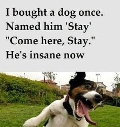 Favorite Steven Wright quote, wouldn't really do this to a dog...