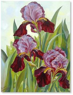 картины цветы ирисы - Поиск в Google