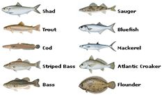Popular Fish of the Great Lakes-Big Rivers Region
